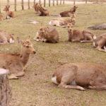 奈良公園~東大寺、朝の春日大社をお散歩!奈良・名古屋(子連れ旅行)その4